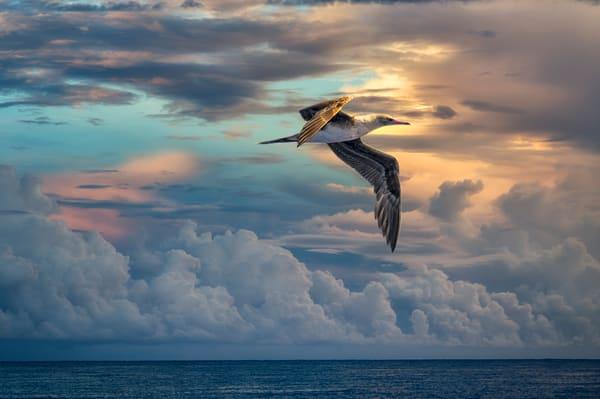 Sunrise Flight    Photography Art | Carol Brooks Parker Fine Art Photography