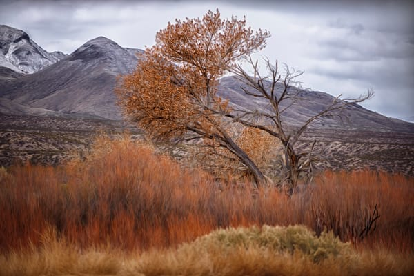 Fall Turns to Winter in New Mexico