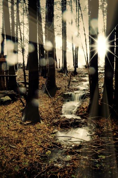 Woodland Waterfall Photography Art | Sage & Balm Photography