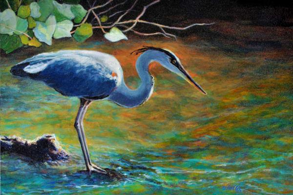 Great Blue Heron Fishing Backwater
