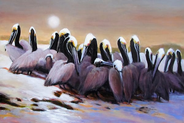 Brown Pelicans On Shamrock Island Refuge Art | Charles Wallis