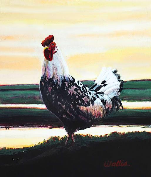 Farm Rooster  Art | Charles Wallis