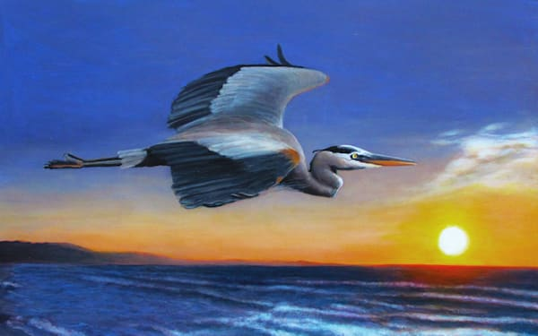 Great Blue Heron Sunrise Flight