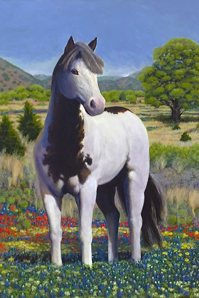 Hill Country Stallion 300 Art | Charles Wallis