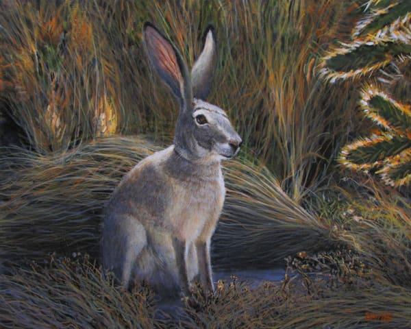 Jack Rabbit Art | Charles Wallis