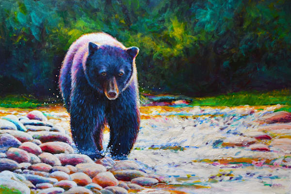 Black Bear On The Prowl.300.12x18 Art | Charles Wallis