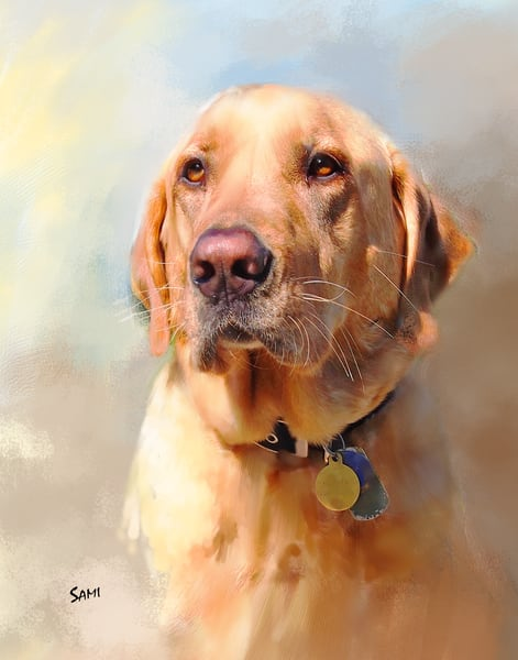 Animal Art, Photographs & Paintings of dogs, cats, horses