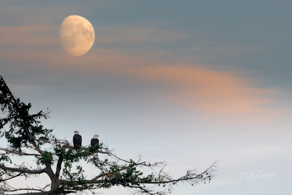 eagles-sunset-moon-landscape