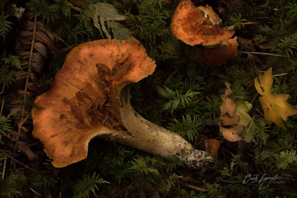 Mushrooms on Forest Floor Photo for sale by Barb Gonzalez Photography