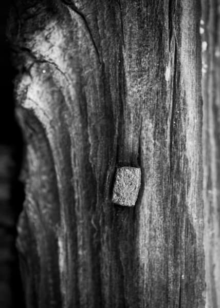 Details, from Stagville: Black & White (November 2011) [Left image]