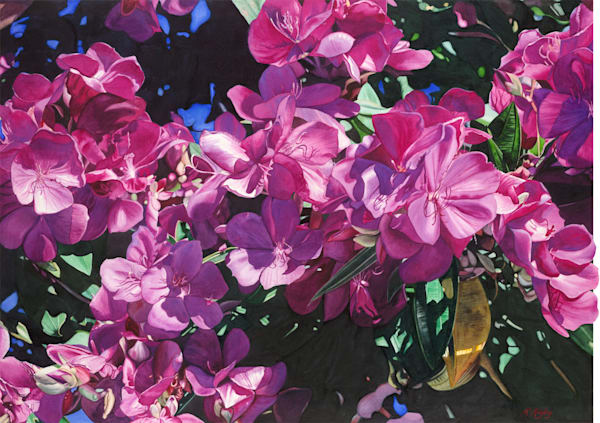 Tibouchina in Full Bloom - Original