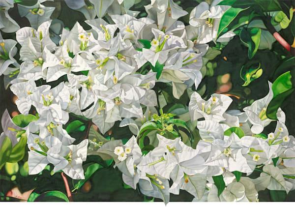 Bougainvillea Abundance - Original