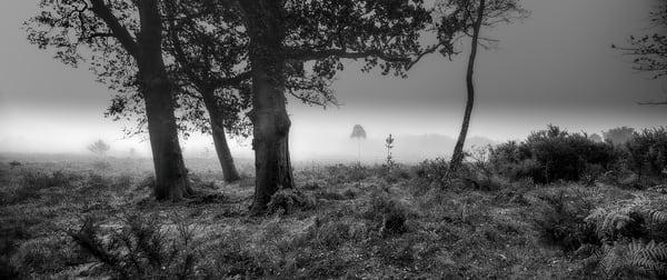 Sharpened   2048px Art | Roy Fraser Photographer