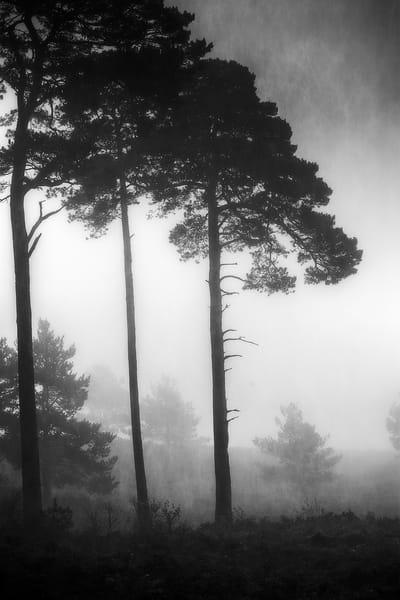Tree3-2048px