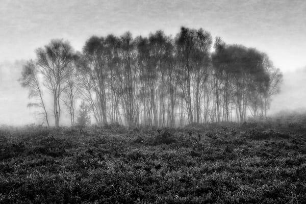 trees 2048px