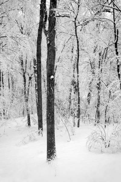 Winter on Squirrel Hill