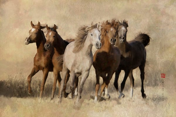 an image of 5 Young Arabian Colts in a lovely photograph. This photo art available for sale by Kathy Chin. You can buy this image as canvas art,  and also printed on Metal or Fine Art Papers