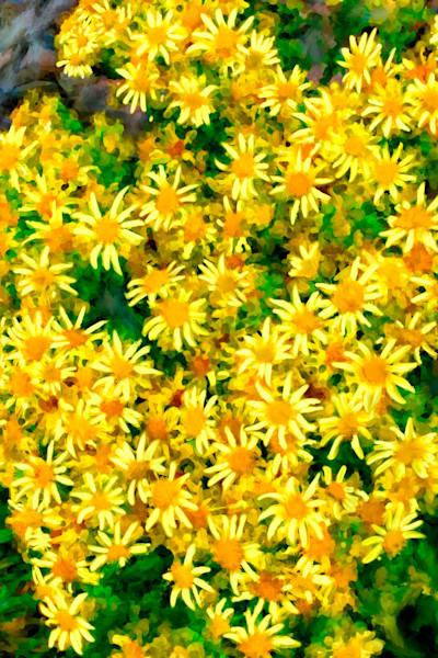 Scottish Yellow Flowers Art | Dave Fox Studios