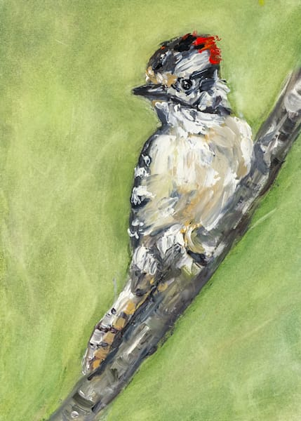Painting of a Downy Woodpecker by Janet Jardine