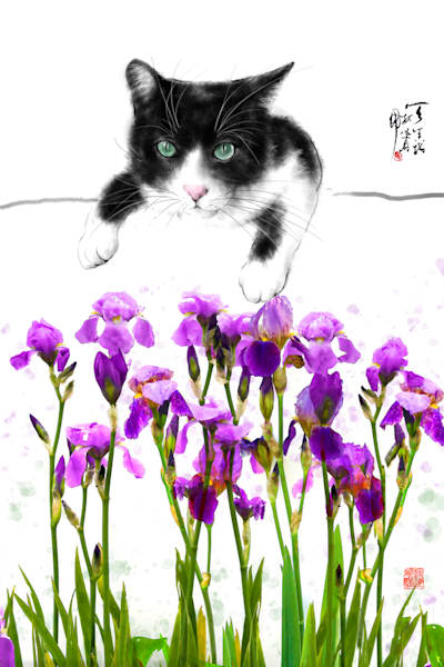 Cats 061 Photography Art | Cheng Yan Studio