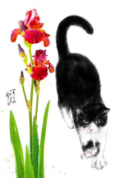 cats 063