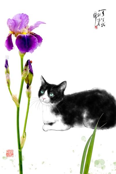 cats 085