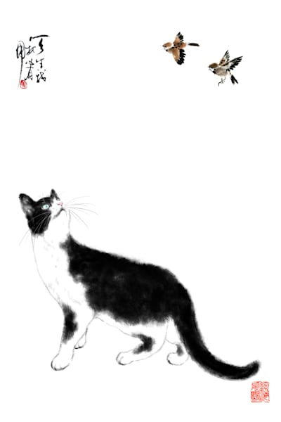 Cats 088 Photography Art | Cheng Yan Studio