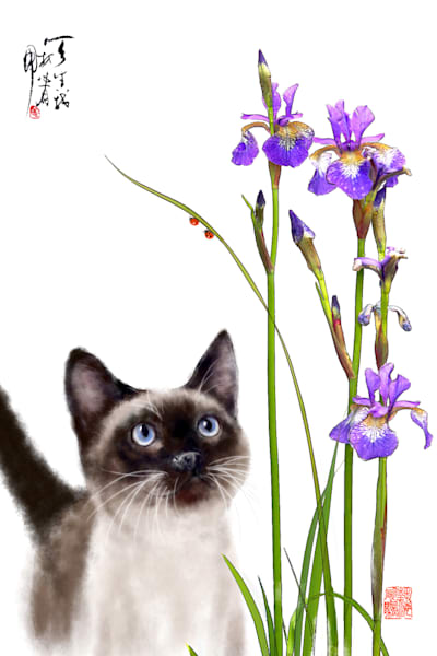 cats 094