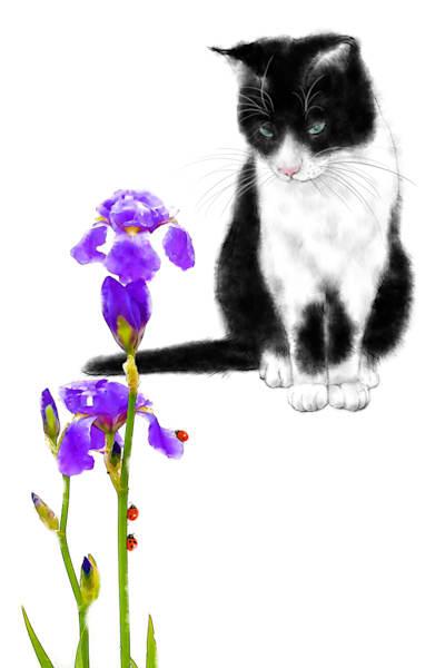 Cats 106 Photography Art | Cheng Yan Studio