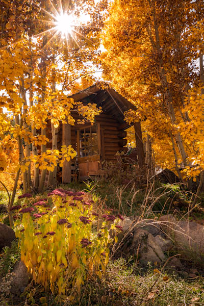 The Cabin & The Fall
