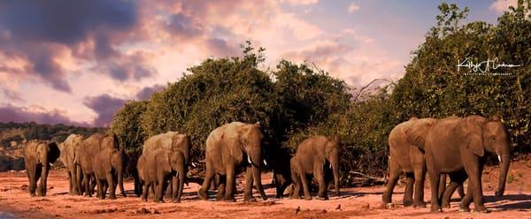 Elephant March2