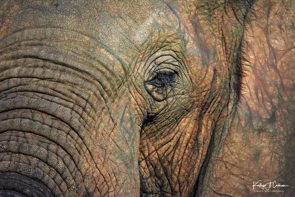 Macro Elephant