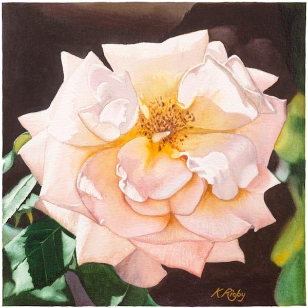 Rose 4 - Original