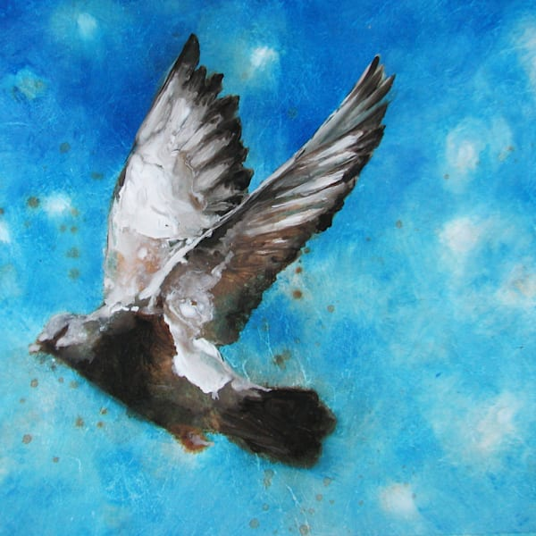 Blue Star Pigeon