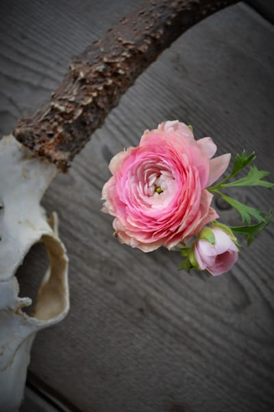 Modern West Collection of Photographs with Deer Skull and Ranunculus Flowers for Sale as Fine Art