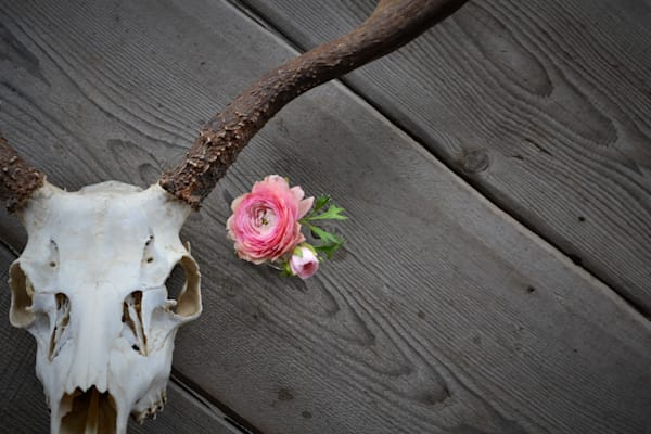 Rustic Photograph of a Deer Skull and Flower for sale as Fine Art