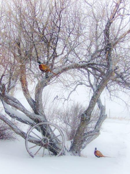 Winter Pheasants