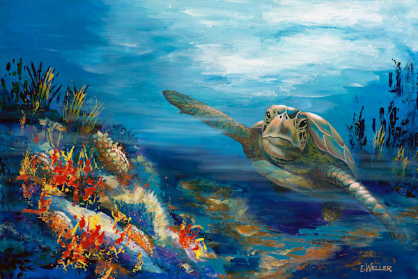 Turtle Cruisin