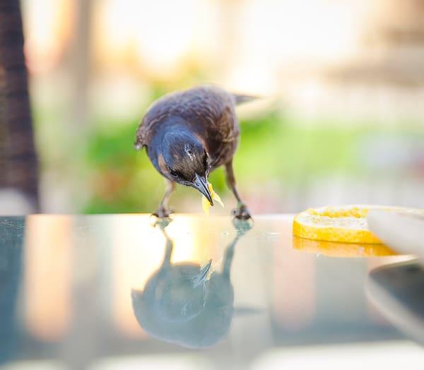 Breakfast Guest