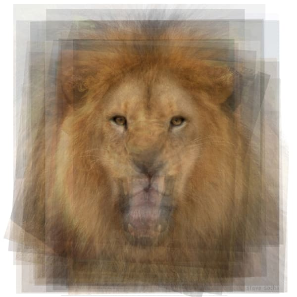Overlay art – contemporary fine art prints for sale of a lion