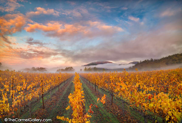 First Light Calistoga Art | The Carmel Gallery