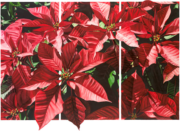 Poinsettia Triptych - Original