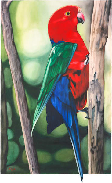 King Parrot - Original
