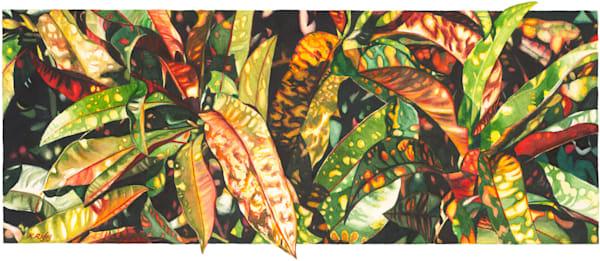 Croton - Original