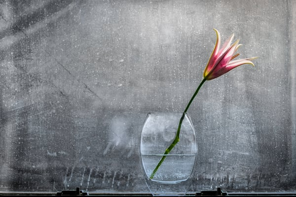 dirty screen, window filled with flowers, single lily flower, pink lily flowers, art photographs of flowers,
