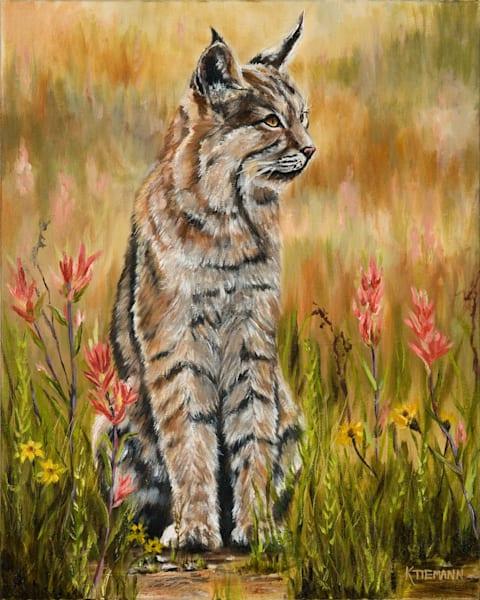 Spring bobcat fine art print