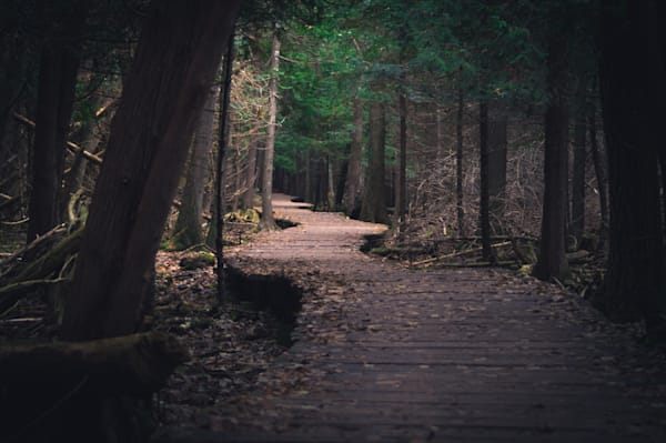 Woodland nature photography prints for sale   Sage & Balm Photography