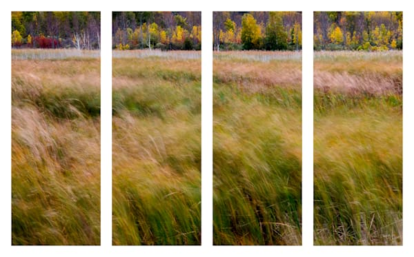 Winds of Autumn - Quadtych