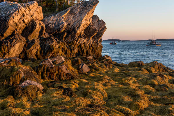 Art photoraph of Lobster boats returning home in late afternoon light, with rocky coast bathed in warm color.