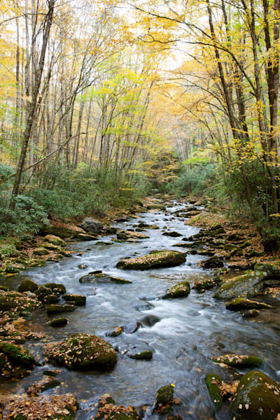 Fall Stream Art | Cunningham Gallery